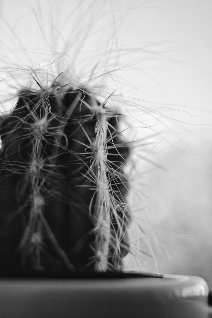 Close-up shot of a cactus, Black and white photography