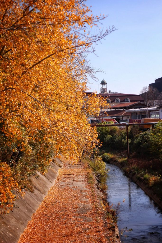 autumn-orange-trees-next-the-river-valstyle
