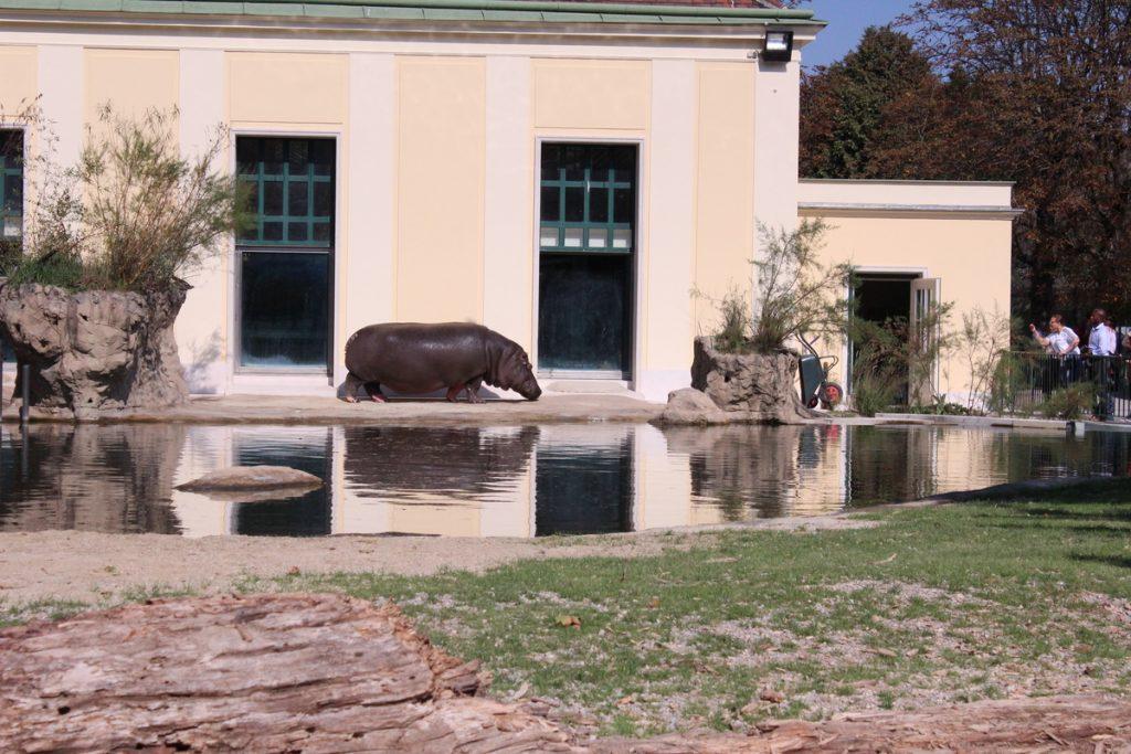 Хипопотам в Зоопаркът във Виена
