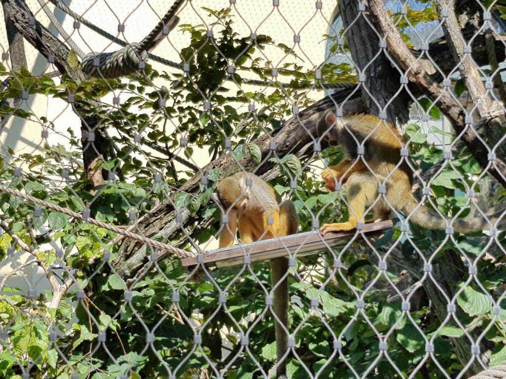 Майнмунки в Зоопаркът във Виена